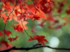 秋   - 優しき赤 -