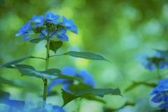 青と緑の賛歌