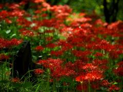 赤い群れ  弐