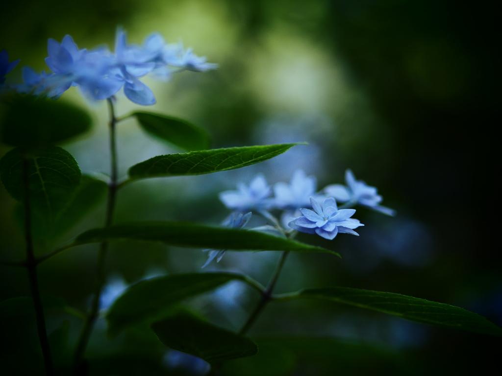 密やかな森に。。。~七段花~