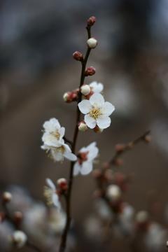 小春日和 梅の香りに誘われて ②