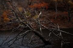 湖上の朽木 ②