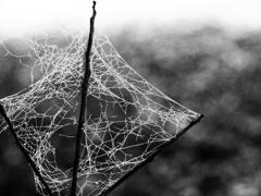 synapse-凍った記憶