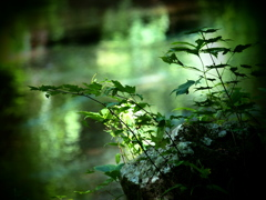 翠の川面 ②