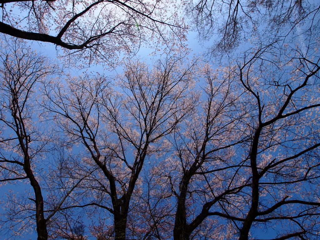 枯れ木に花を。。。