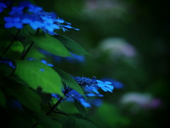 Silent_blue ~Second Version~