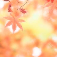 秋・好日  ②