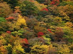 秋・極彩の森 ③