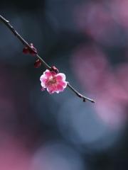 今を春べと 咲くやこの花