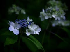 白い花と青い星屑