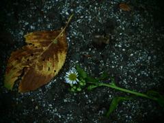 花と蕾の物語