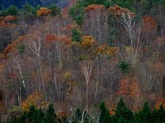 冬近し  - 落葉の森 - ②
