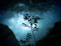 Silhouette -命の輪郭-