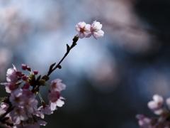 桜日和  ⑥