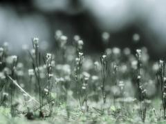 小春の野 ~たけくらべ~