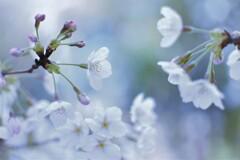 Spring story  ②