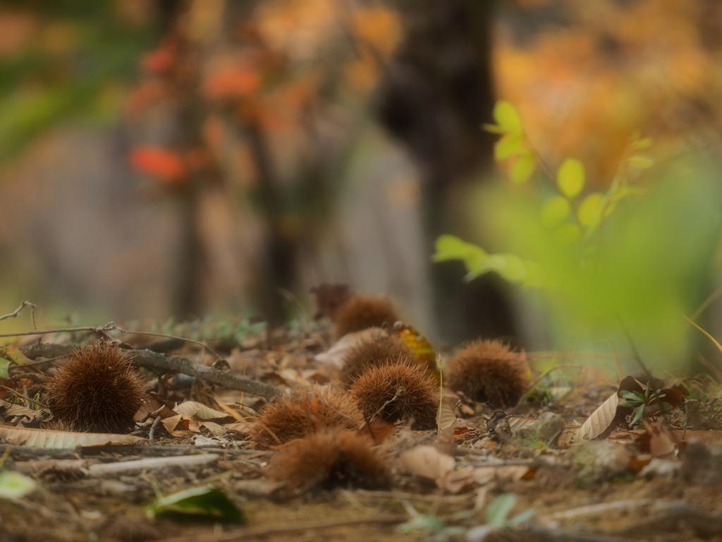 小さな栗の樹の下で・・・(^^)