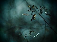 狂気の花園  ~枯れ紫陽花・終章~