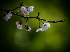 桜日和  ⑤