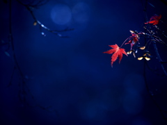 蒼い森のメモリー  ②