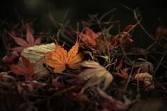 静かに秋の余韻