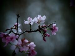 束の間の春