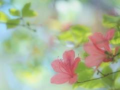 春色スケッチ ② ~躑躅~