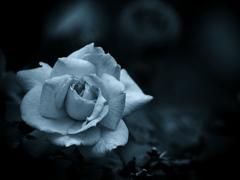 モノトーンの記憶 - 過ぎし日の薔薇 -  ⑥