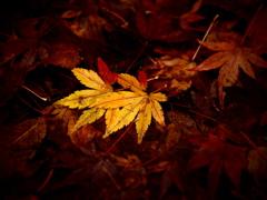 降り積もる秋の色