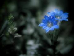 サファイアブルーの妖精 -Second-