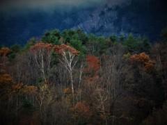 冬近し  - 落葉の森 -