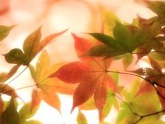 深まり行く秋の彩
