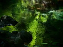 翠の川面 ③