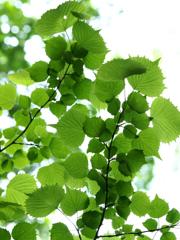 六月の葉っぱ  其の四