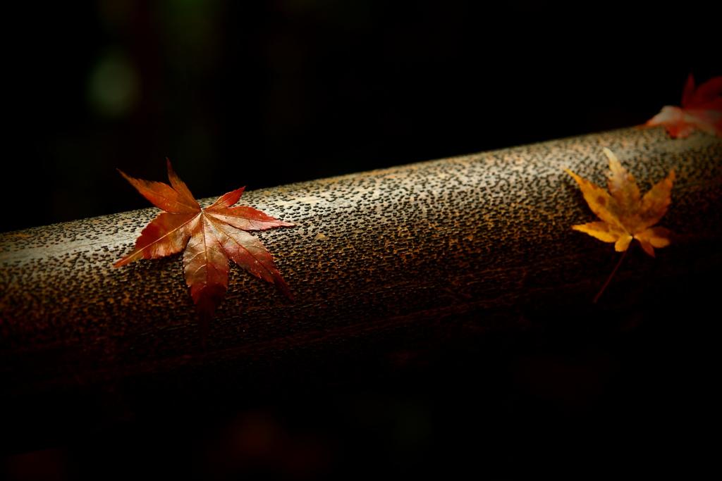 仄かに晩秋の色  其の参