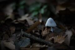 小さな白い傘