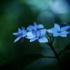 密やかな森に。。。 ② ~七段花~