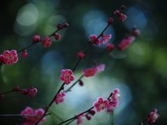 終演迫る・梅花の宴