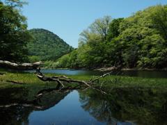 初夏の湖沼  ③