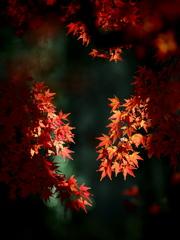 晩秋の陽は優しく