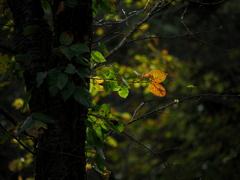 迎秋の二葉