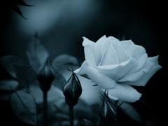 モノトーンの記憶  - 過ぎし日の薔薇 -  ②