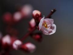 この春生まれ♡ ②