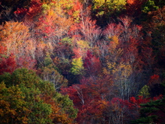 秋色のパレット