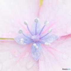 梅雨空の宝石箱