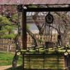 梅とつるべ井戸