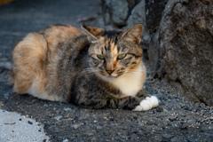 見たことがありそうでなさそうな柄の猫