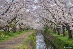 高座渋谷 千本桜付近散策