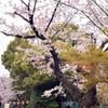 王道の上野公園