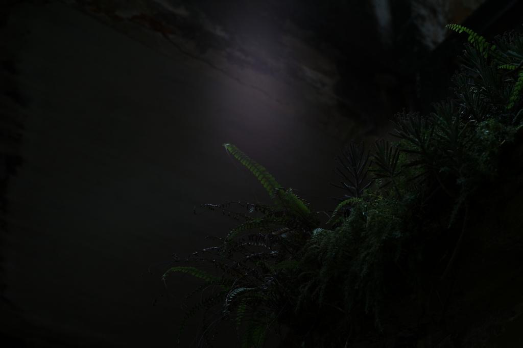『生きる』 〜軒下の翠